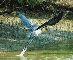 Sundarbans Vacation Package