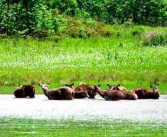 Tour Package Sundarbans