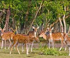 Tour Package In Sundarbans