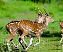 Sundarbans Holiday