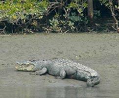Sundarbans Trip
