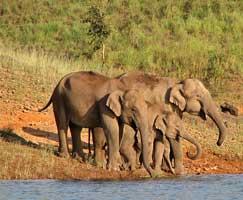 Tour To Sundarbans