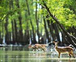 Sundarbans Honeymoon Tour Package