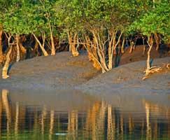 Sundarbans Honeymoon Tour