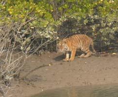 Travel To Sundarbans