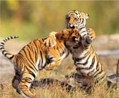 Sundarbans Tourism Honeymoon