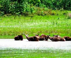 Sundarbans Package