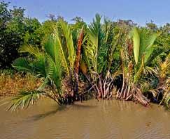 Sundarbans Travel Package