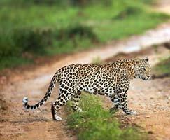 Sundarbans Honeymoon