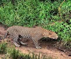 Sundarbans Tourism