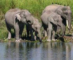 Holiday In Sundarbans