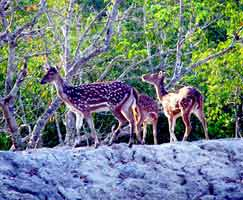 Honeymoon Tour To Sundarbans